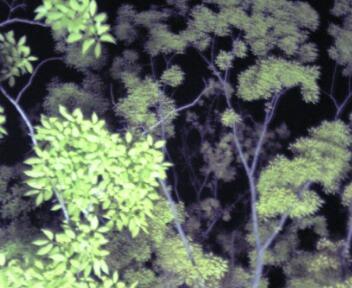 image/1911-2006-05-03T01:57:20-1.JPG